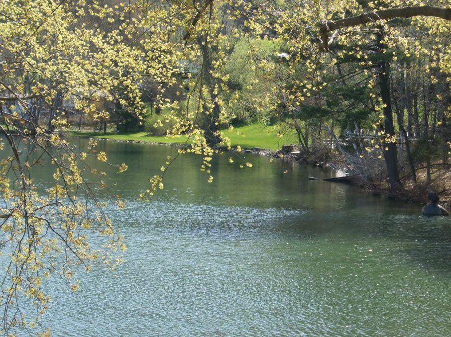 Lake Otsego - Trees