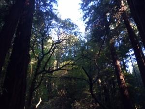 Muir Woods 42