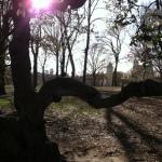 Central Park 10