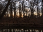 Wooded Sunset