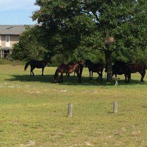 Wild Horses Plotting
